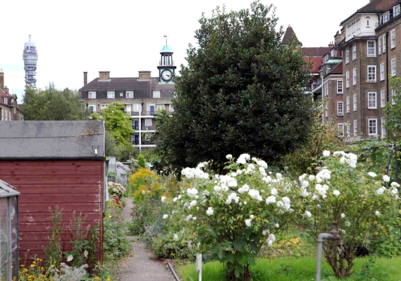 Allotments towards Windsor House and BT Tower