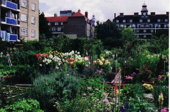 Allotments facing Datchet House & Windsor House